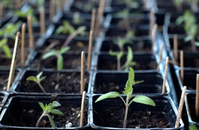 List of the 10 Easiest Vegetables to Grow