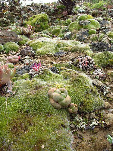 Succulent wonderland