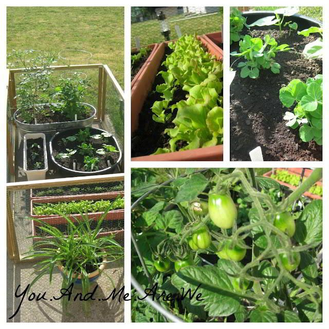 Container Vegetable Garden Outside Spaces Pinterest
