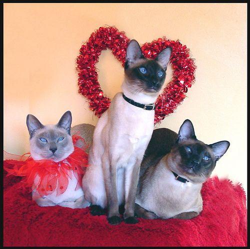 valentine's day cat collars