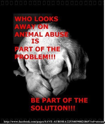 Help Stop Animal Abuse and Neglect!! Give the animals hope to carry on. The animals need all of us now from all angles. Peace, Love, and Happiness to the animals. TAKE ACTION!!