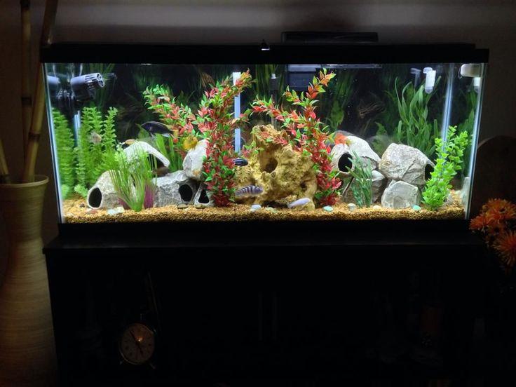 Fish tank decoration ideas for cichlids