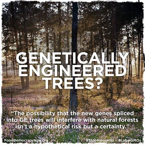 genetic engineering between a tree and Critics of genetic engineering spend a lot of time focused on the potential for unintended consequences of humans redesigning the genetic material of a particular plant but this is characteristic of virtually every technique used by breeders, whether conventional or genetic.