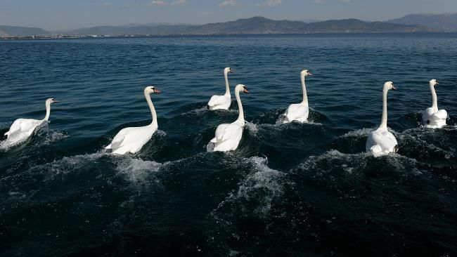 Cost seven swans a swimming if you want to buy those seven swans