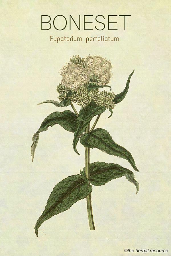 Informative speech herbal medicine