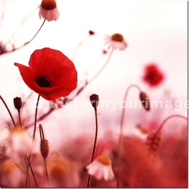 poppy flowers - Painting inspirationsPoppy Flowers Painting