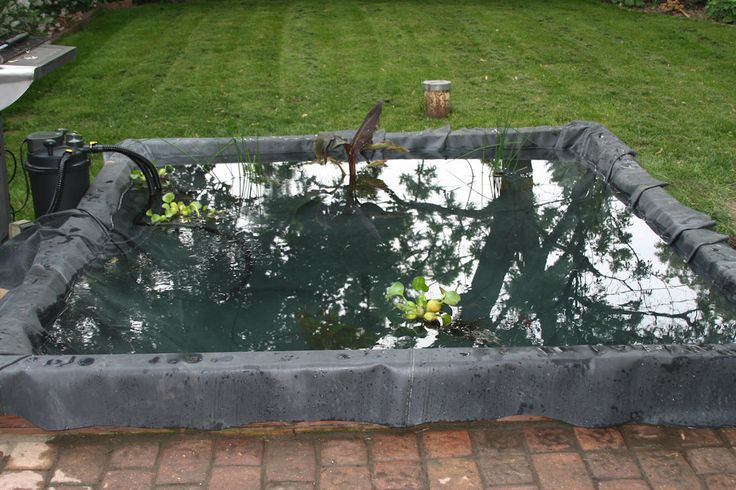 Diy koi pond dream home pinterest for Diy small fish pond