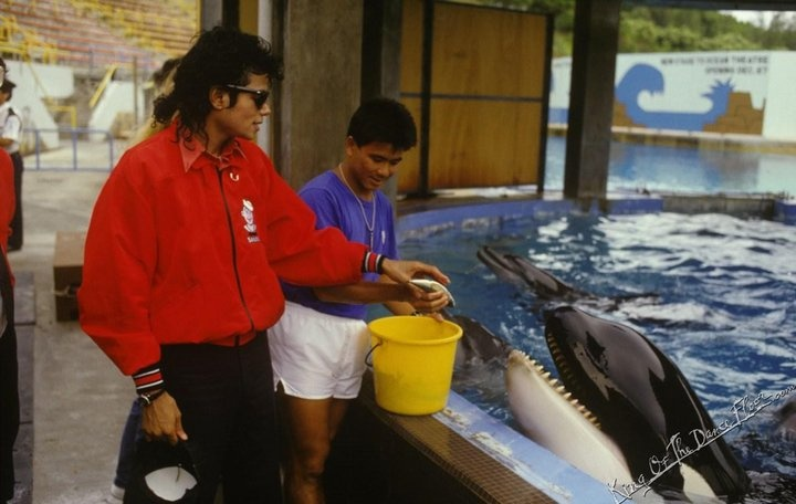 michael jackson free willy video