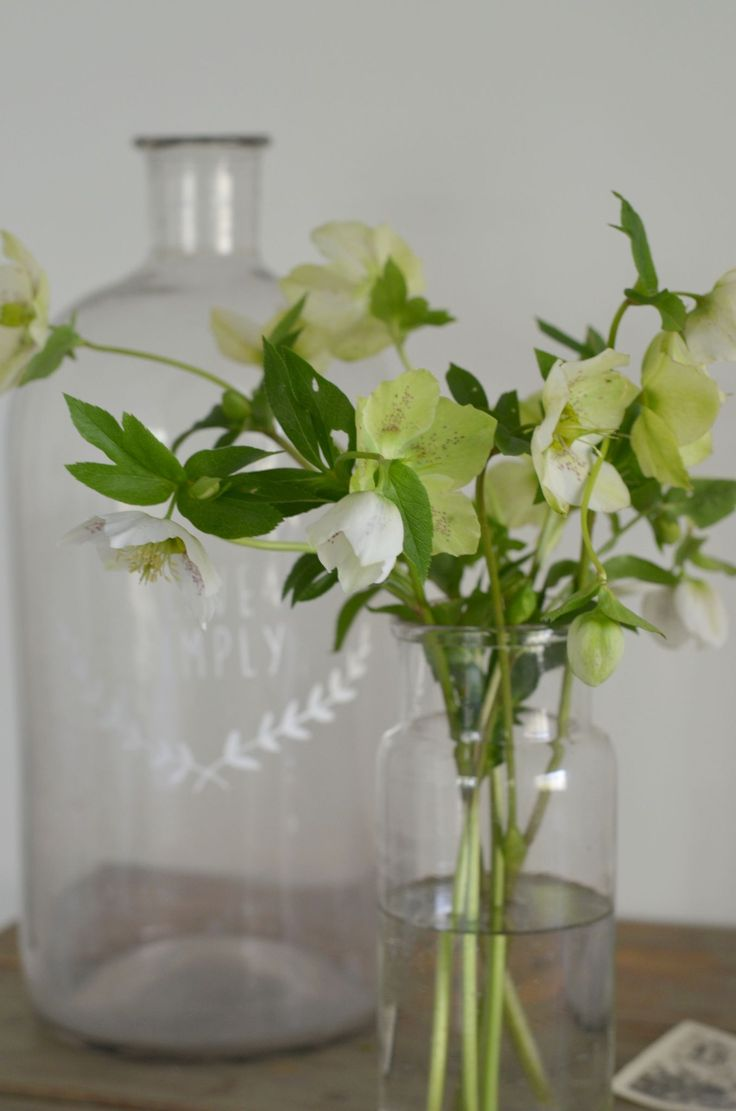 helleborus -cuttings in February from the garden to brighten my day
