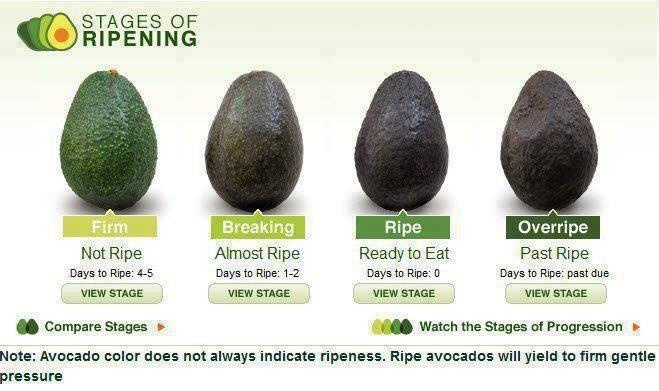 Avocado Not Good For Dogs