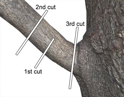 Pruning Article