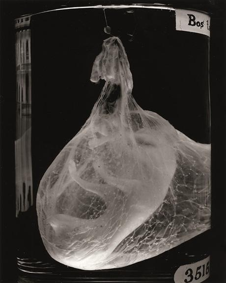 Animal Embryo 04 | Veterinaria | Pinterest
