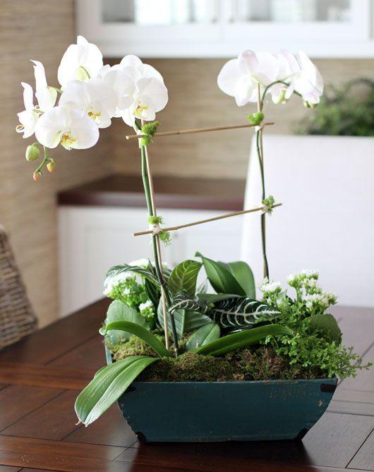 Diy orchid centerpiece gardening pinterest