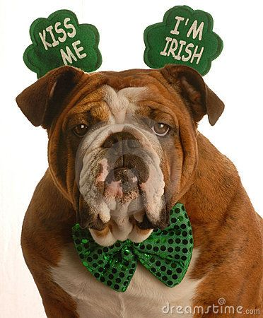Happy Saint Patrick's Day from the dog.