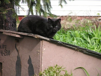 Outdoor Cat Shelters and Feeding Stations plans/ideas