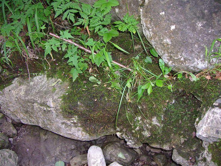 Pedogênese em pedra calcária