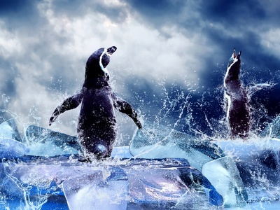 Magellanic Penguins Ice Dance