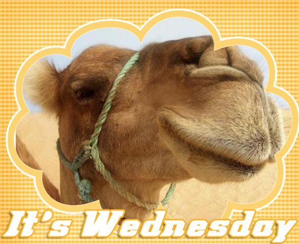 wednesday funny animals