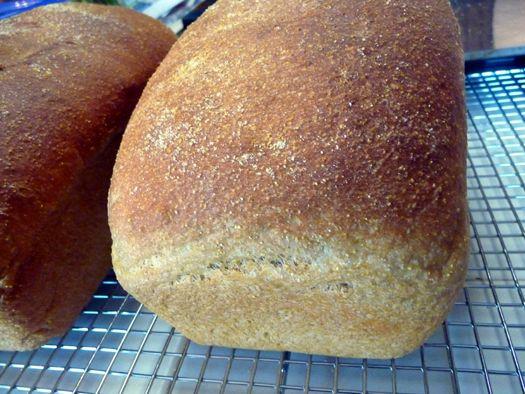 Anadama Bread- bread of my dreamssss (has molasses init)