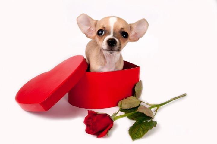 happy valentine's you too