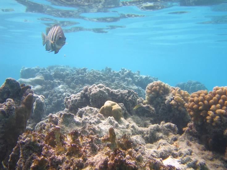 Hanauma bay oahu snorkeling fish i 39 ve seen snorkeling for Fishing spots oahu