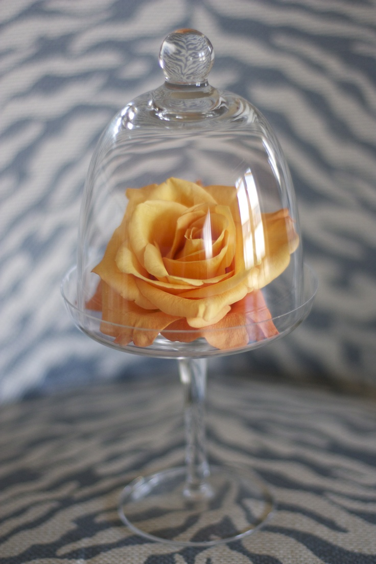 Rose Under Glass Of Rose Under Glass Home Decor Pinterest