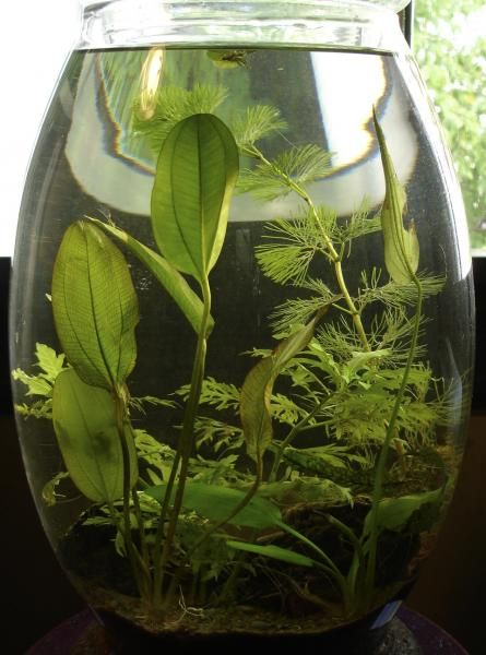Container Water Plants Water Plants Pinterest