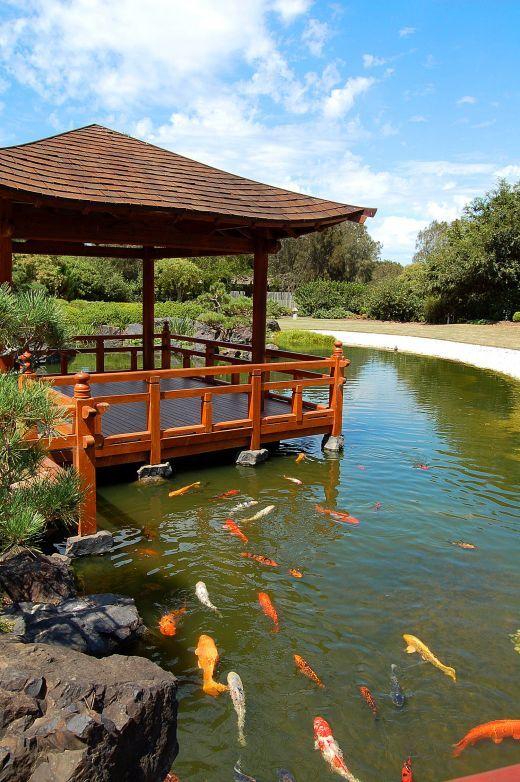 Japanese water garden tips for Japanese koi water garden
