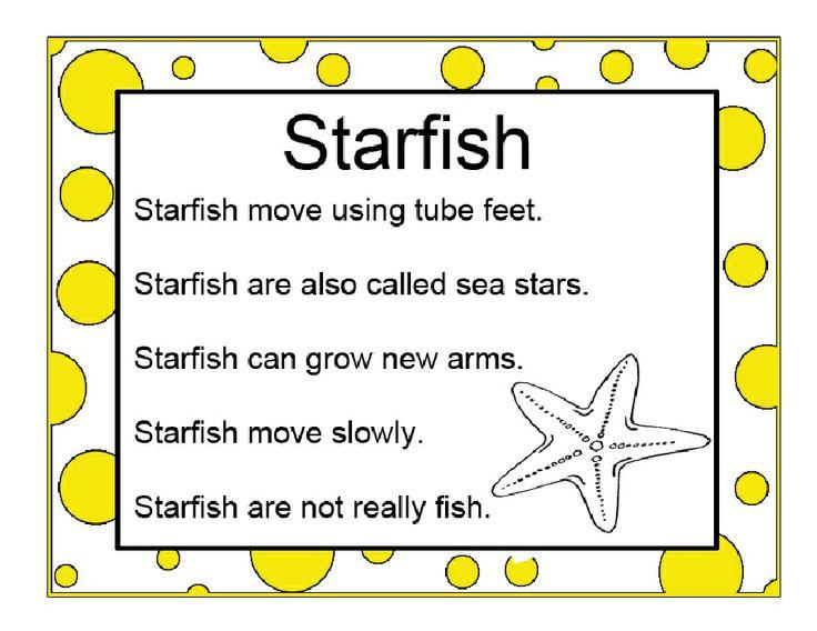 Starfish info ocean pinterest