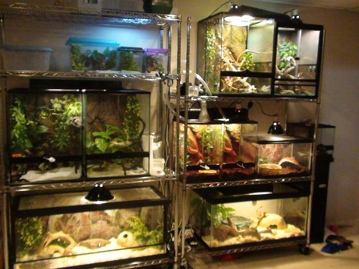 Idea For Keeping Reptile Terrariums Snake Reptile