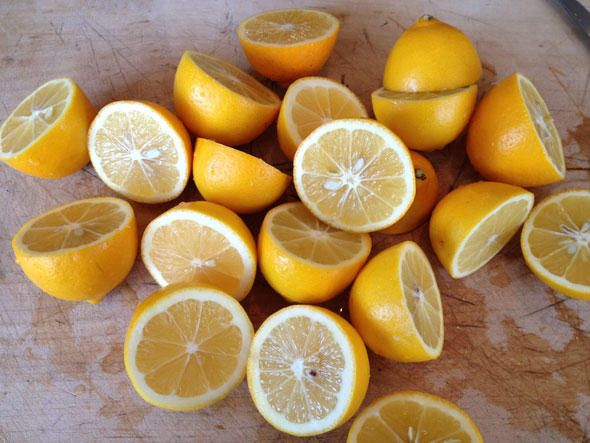 Meyer Lemon Marmalade - plan on making this using Meyer lemons from ...
