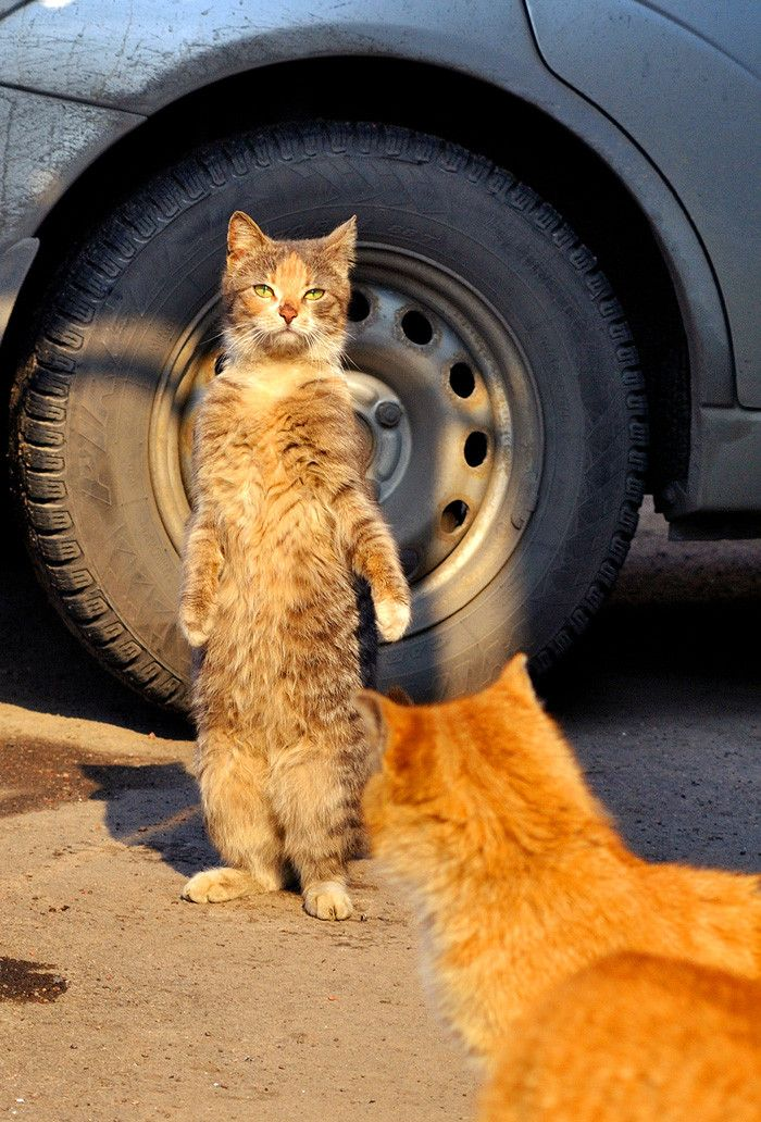 cats with leukemia