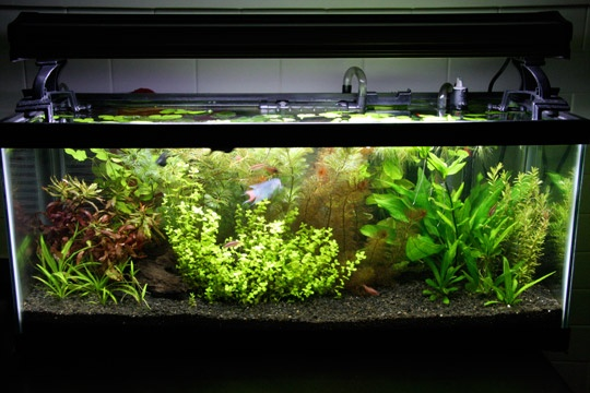 dutch tank aquarium plant aquascape Aquatic & Plant Garden Pinter ...