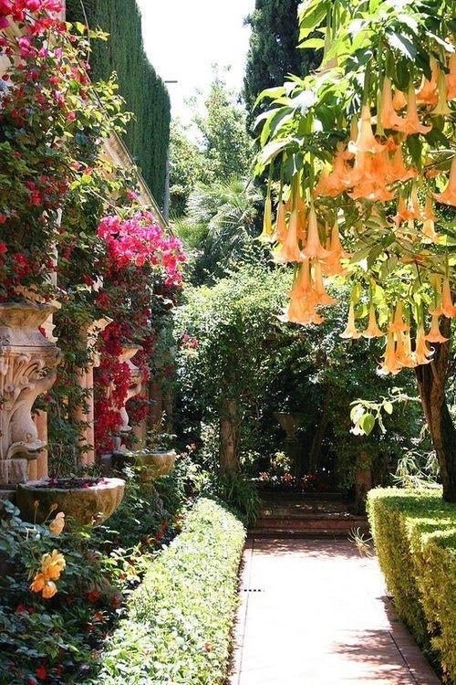 plant inside the garden