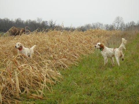 Kentucky Upland Hunts   BestGear