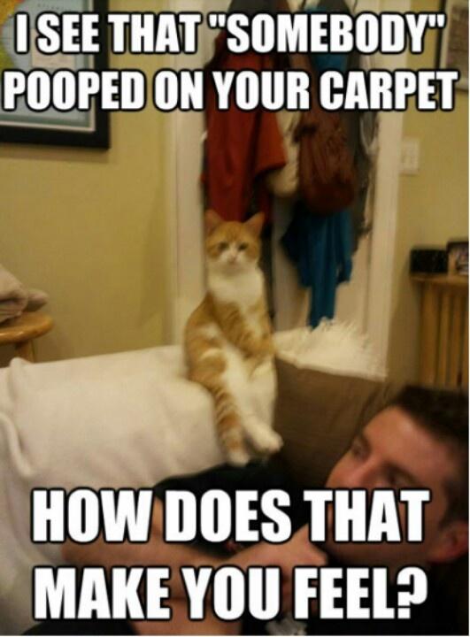 Cat memes | Cat Humour | Pinterest