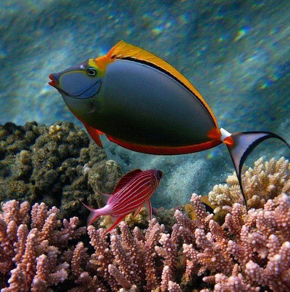 Beautiful tropical reef fish colorful tropical fish for Reef tropical fish