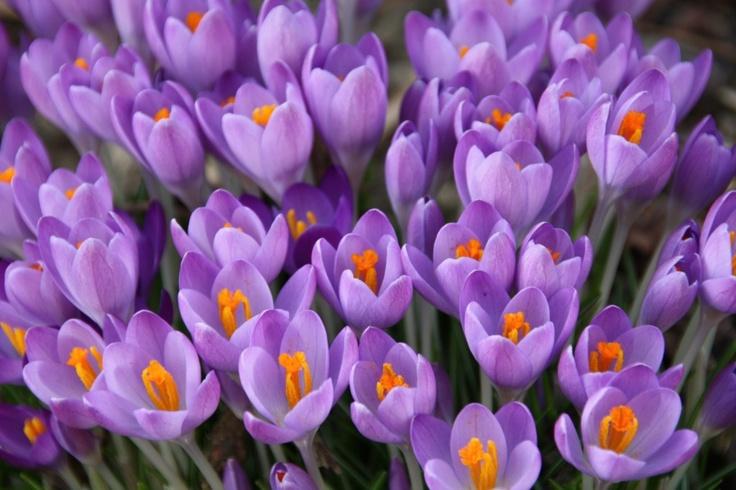 Voorjaarsschoonmaak: vijf tips