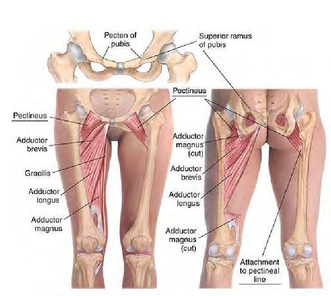 hip flexor stress recuperation physical games