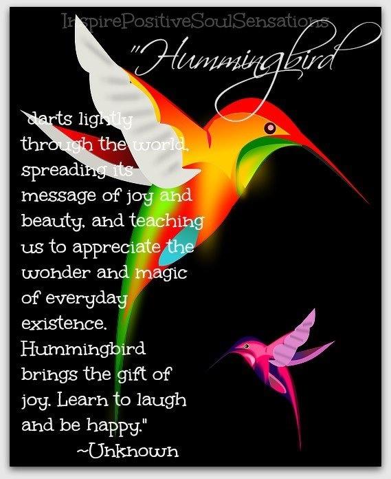 the hummingbird positive inspirational quotes pinterest