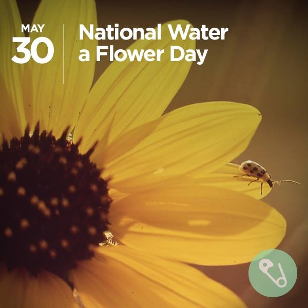 national water a flower day daily fun pinterest