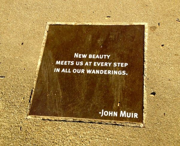 Best John Muir Quotes