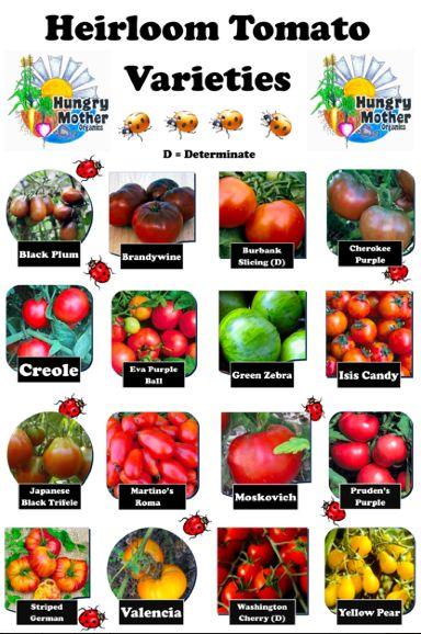 Heirloom Tomato Varieties Homesteading Pinterest 640 x 480