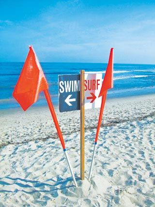 swim or surf