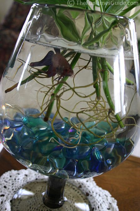 Wine glass fish tank crafty pinterest for Wine with fish