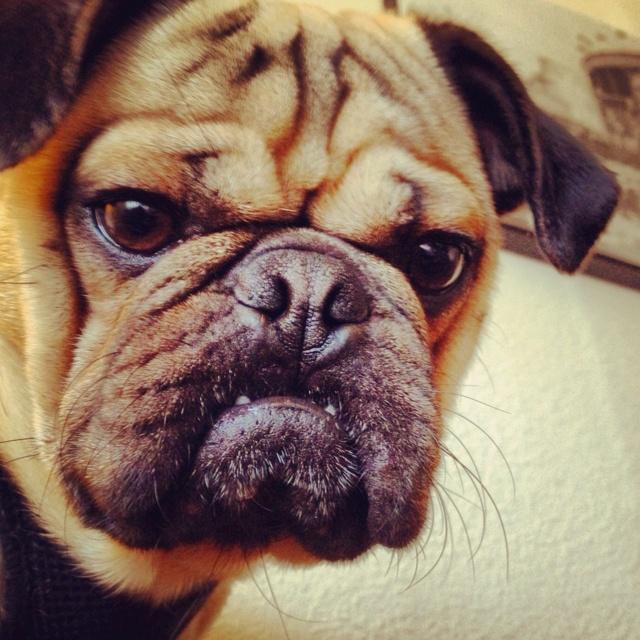 Annoyed Animal Face