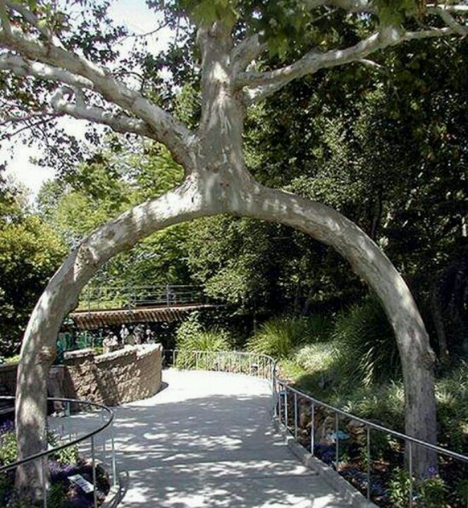 This is now on my places to visit and odd things to see for Gilroy garden trees