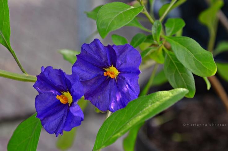 Que hago hoy en el jard n el balc n en el verano for Arbustos para jardin con flores