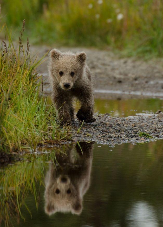 little brown bear | Too Cute:) | Pinterest