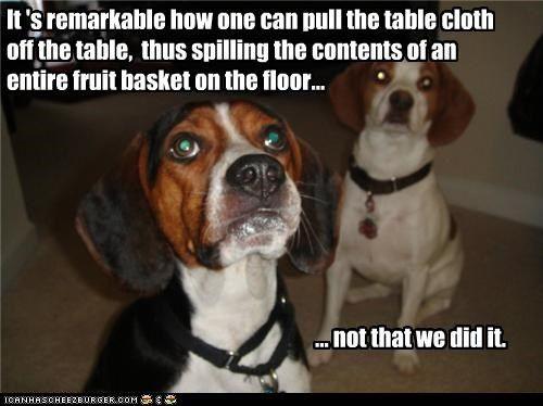 Fun Quotes About Beagles. QuotesGram